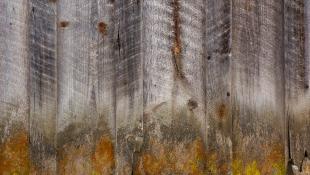 Timber wood texture
