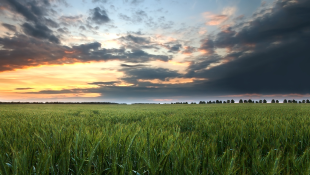 Green field with sunset