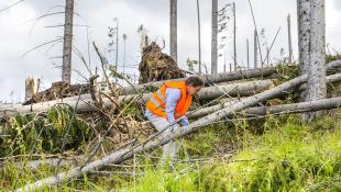 Construction worker fallen trees after hurricane