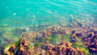 Algae in Ocean