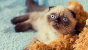 Cute cat lying against teddy bear looking up at camera